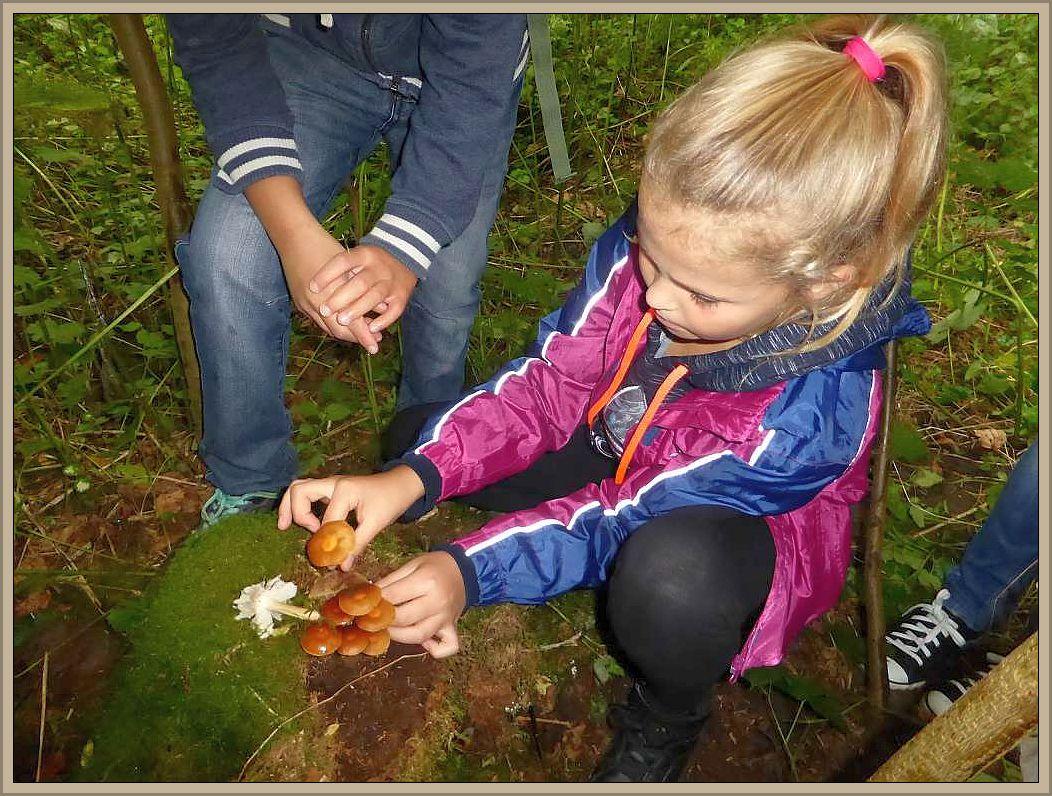 Vorsichtig pflückt das Mädchen die Stockschwämmchen vom Baumstumpf, denn sie hat gerade gelernt, dass die Pilze sehr lecker schmecken und dass man sich den Stiel genau anschauen muss um die typischen, kleinen, bräunlichen Schüppchen
