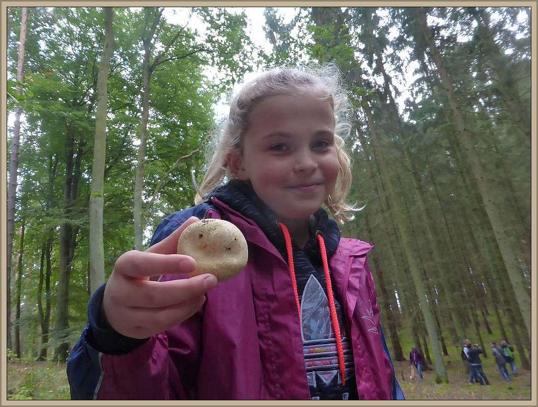 Der Kartoffelbovist ist ein Bauchpilz. Er produziert seine für die Vermehrung der Art zuständigen Sporen im Inneren. Wenn wir auf reife Boviste und Stäublinge treten, so stauben oder rauchen sie. Das sind unzählige Sporen, die der Wind nun weit weh weht, bis sie irgendwo landen und wenn es ihnen dort gefällt, entsteht ein neuer Pilz. Der Kartoffenbovist ist giftig, viele andere Boviste und Stäublinge können jung gegessen werden, solange sie noch nicht reif und innen weiß sind.