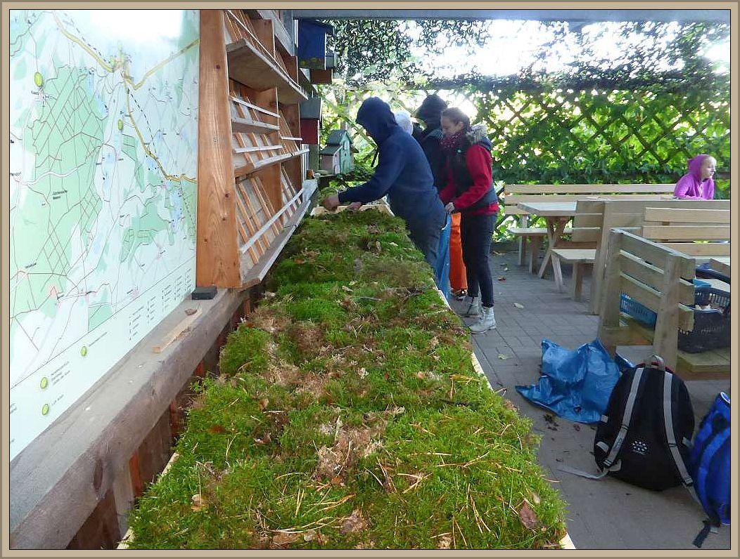 Zunächst bringen die Schüler das frische Moos auf die Flächen.