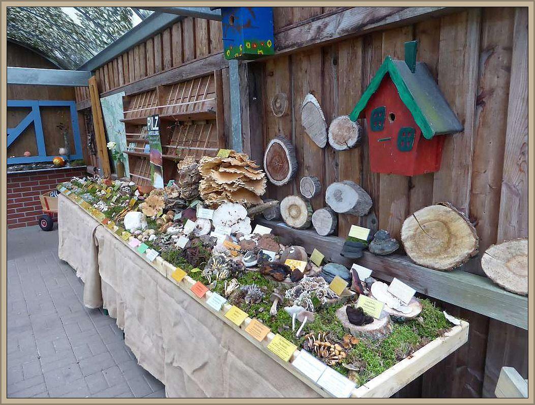 )0 Pilzarten sind noch bis Freitag auf dem Gelände von Lütt Acker in Sternberg zu besichtigen.