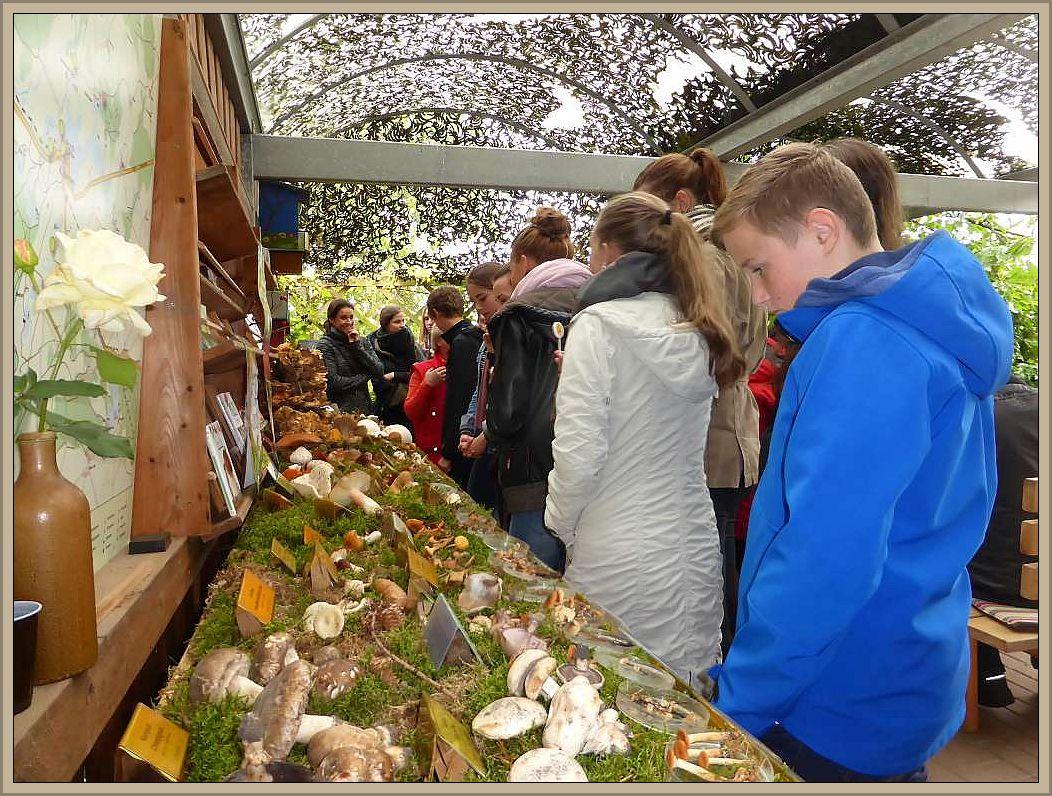 Am Vormittag herrschte großer Andrang durch viele Schüler, die im Rahmen ihres Unterrichtes unsere Pilzschau besuchten.