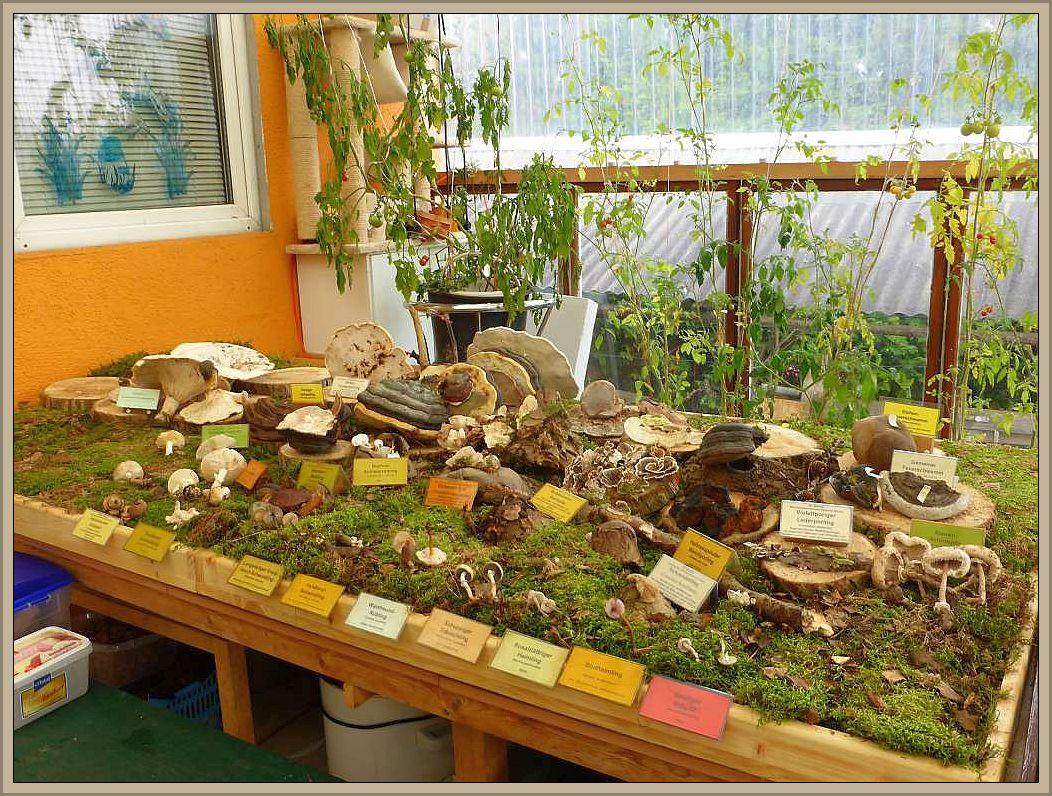 Im Außenbereich hatten wir bereits eine kleine Pilzausstellung aufgebaut.