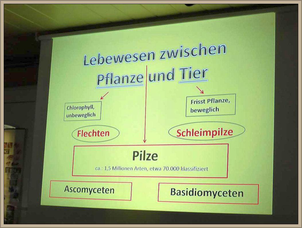 Gleich zu Beginn verdeutlicht Ulrich Klein anhand einer erarbeiteten Graphik warum die Pilze ein eigenes Reich beanspruchen.