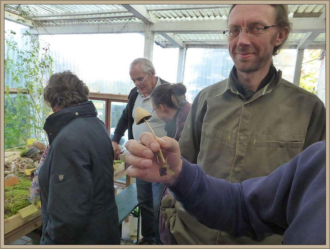 Der Lederbraune Mürbling (Psathyrella conopilus) wurde bereits auf der Anreise entdeckt.