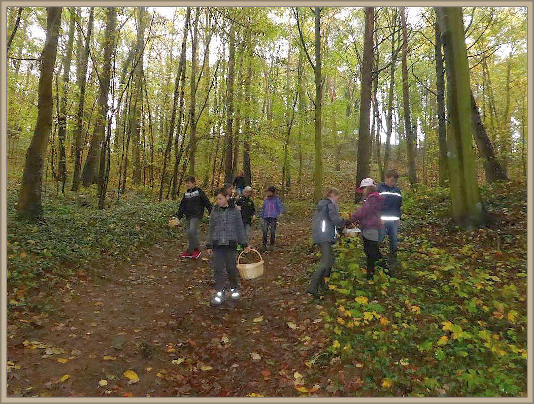 Bei den vielen Blättern auf dem Waldboden ist es gar nicht so einfach, die kleinen Hutträger zu entdecken.