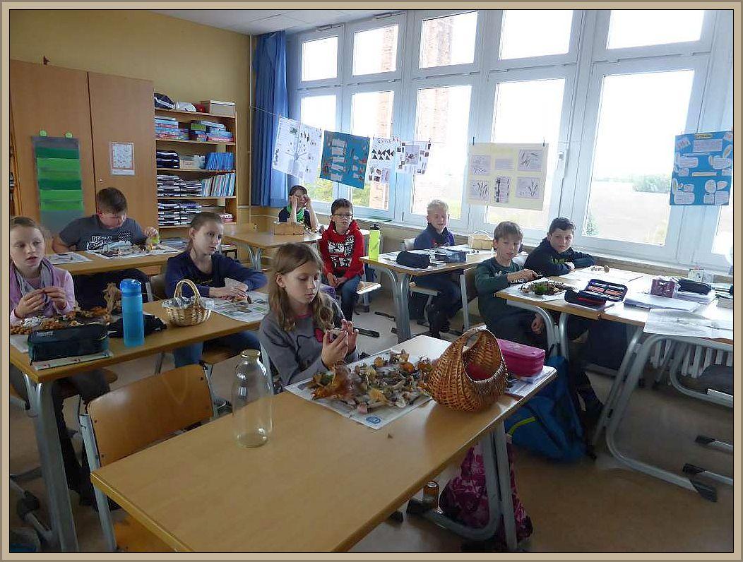 Im Klassenzimmer wurden die Pilze nochmal auf der Schulbank geordnet und vorgestellt.