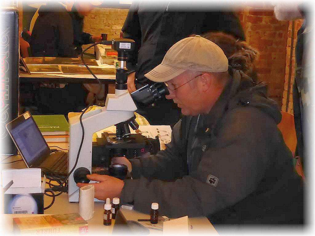Der Chef beim Mikroskopieren. Torsten Richter beschäftigt sich vor allem mit kleinen Schlauchpilzen, ein riesiges und bisher wenig untersuchtes Gebiet der Mykologie. Ein Mikroskop ist hier ganz besonders wichtig, ohne dem läuft nichts und eine sichere Bestimmung ist in den wenigsten Fällen makroskopisch möglich.