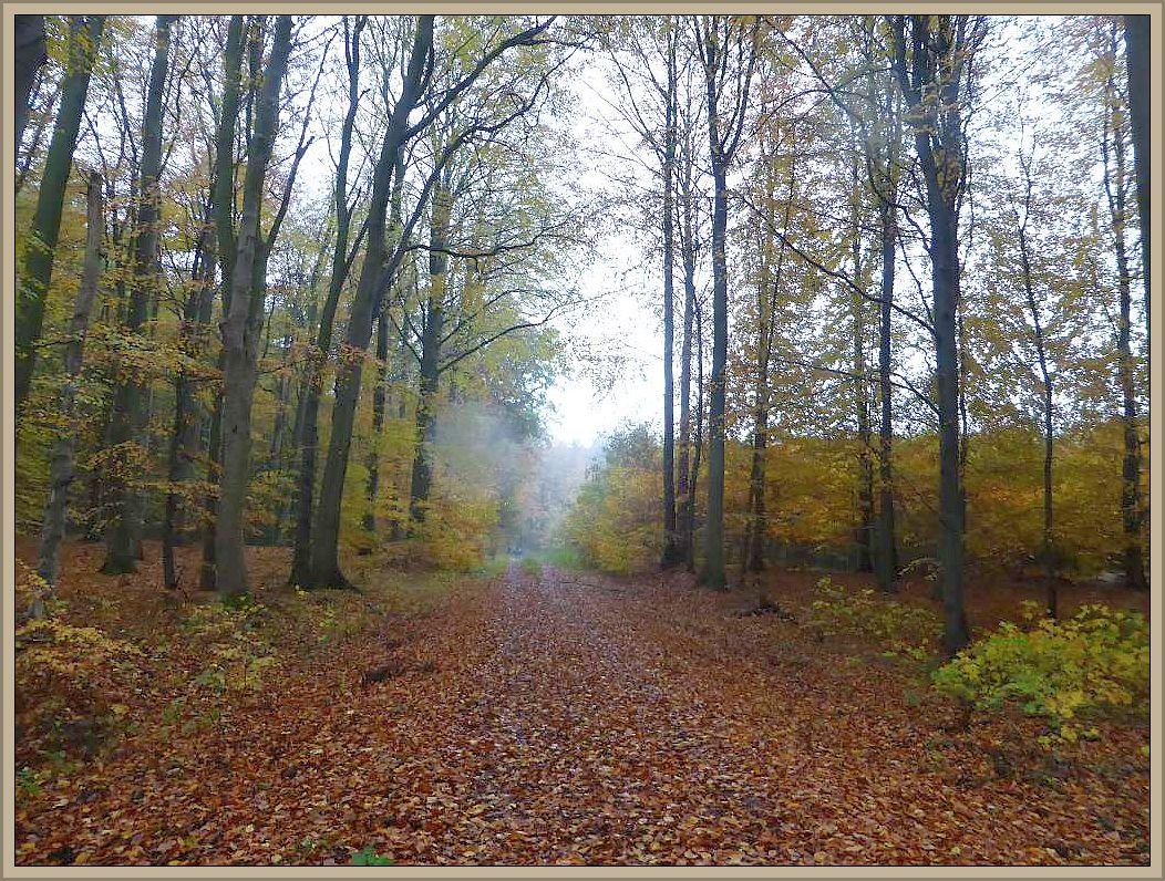 Nasskaltes, verregnetes Novemberwetter im goldfenen Everstorfer Forst am 05. November 2016.