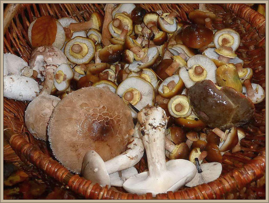 Ein schönes Mischgericht aus dem spätherbstlichen Wald. Die meisten Körbe waren nun gut gefüllt.