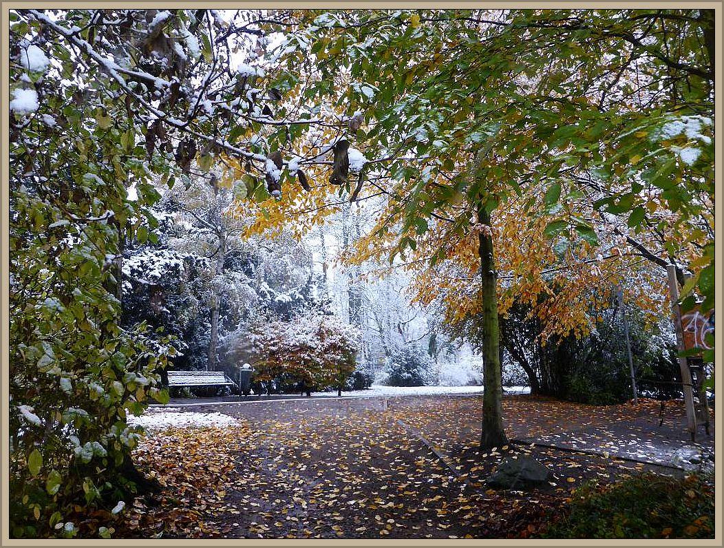 Eigentlich sollten vor dem ersten Schee das Laub der Bäume gefallen sein. Heute kam ihnen der Winter zuvor. Diese Aufnahme stammt von heute morgen, als es zwar schon weiß war, aber der richtige Schnee sollte noch folgen. Am Abend war es auch hier im Wismarer Lindengarten tief verschneit und die Bäume bogen sich unter der Last des Schnees. 08. November 2016.