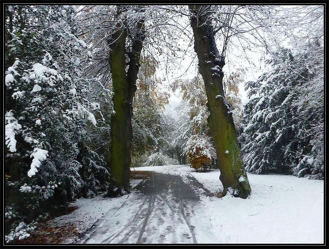 Dichter Matsch auf den Gehwegen und schwerer, nasser Schnee auf Büschen und Bäumen. Das Betrteten von Parkanlagen und Wälder war heute nicht ganz ungefährliches. Das Bild entstand heute Nachmittag im Wismarer Lindengarten.