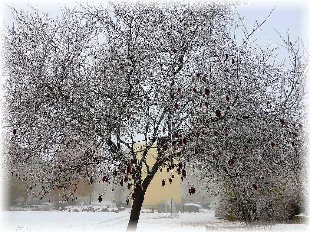 Eisige Kälte Mitte November an der Ostsee in Westmecklenburg. Alles ist in Schnee, Rauhreif und Eis erstart, aber in kürze können wir ja wieder den Herbst erwarten bei deutlich angenehmeren Temperaturen.