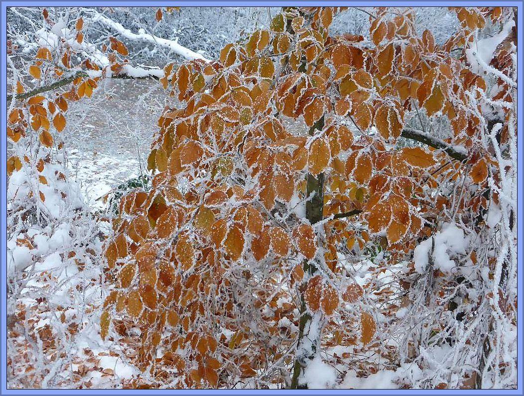 Es gab unzählige, wunderschöne Foto - Motive. Einen wunderbaren Kontrast bildet das braune Buchenlaub in der weißen Winterwelt.