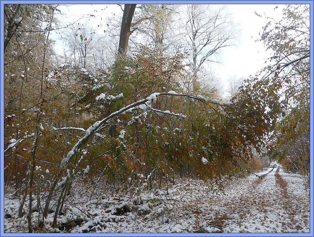 Der meiste Schnee ist zwar von Bäumen und Sträuchern des Waldes bereits herunter getropft oder abgefallen, aber die Schieflage der ehemaligen Last ist immer noch vorhanden. Es waren aber auch große Äste von den Bäumen abgebrochen.