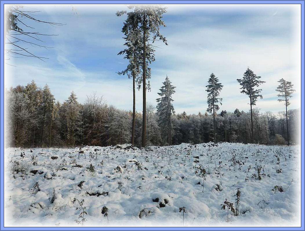 Kartieren im Winterwunderland - das ist wohl die richtige Formulierung zu unserer heutigen Vereinsexkursion. Hochwinterliche Verhältnisse mitten im Spätherbst.