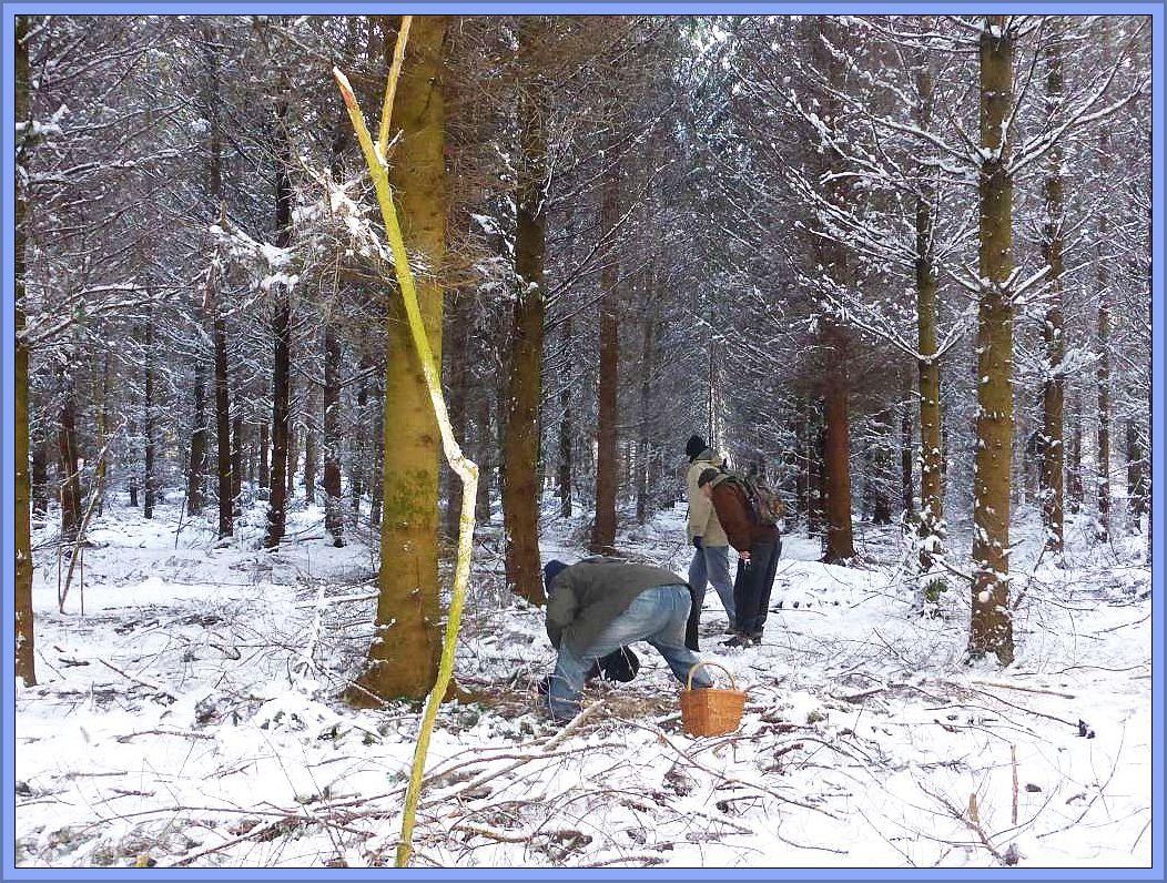 Gerade auch in der vormals viel zu trockenen Nadelstreu des Fichtenwaldes wagten sich nun die Pilze so richtig raus und wurden gleich von den nächsten Witterungsunbilden eiskalt erschischt. Hier wuchsen wirklich viele Pilze, aber alle in Froststarre und unter Schnee begraben.