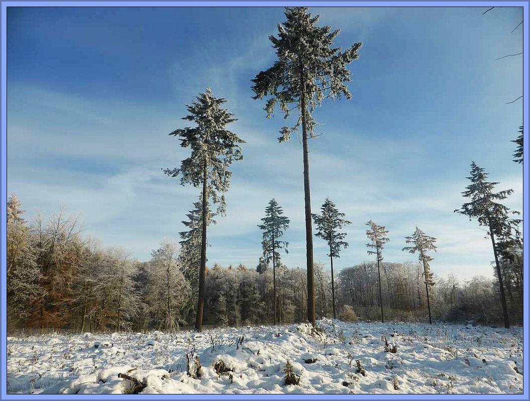 Ein zauberhafter Wintertag im Dalliendorfer Holz.
