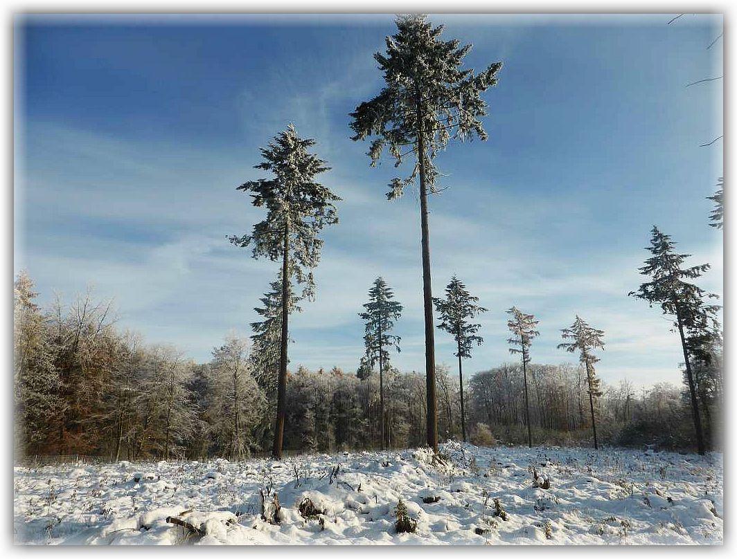 Der Winter hatte es sehr eilig in diesem Jahr. Hier ein Hochwinterliches Stimmungsfoto vom 06. November aus dem Dalliendorfer Wald.