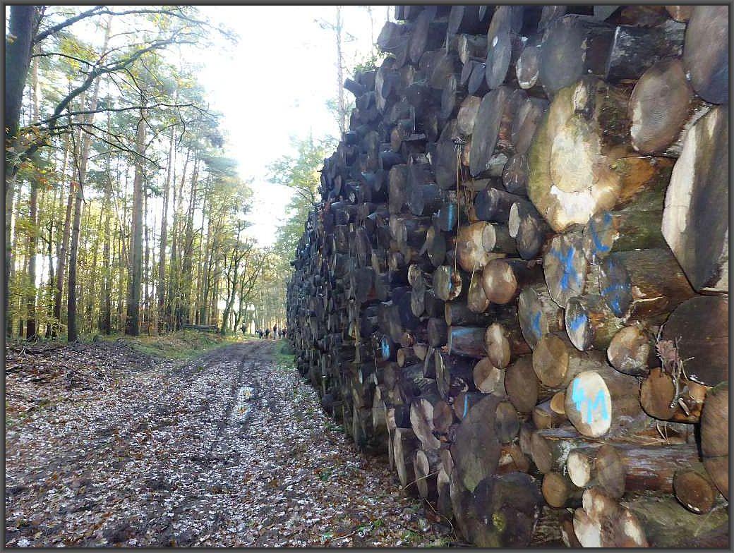 Ganze Wände von Rundholz lagert auch hier vielfach entlang der Waldwege. Ein Zeugnis vom immer massiver werdenden Holzeinschlag in unseren Wäldern. Obwohl Wälder ist eigentlich falsch, es sind ebend Forste!