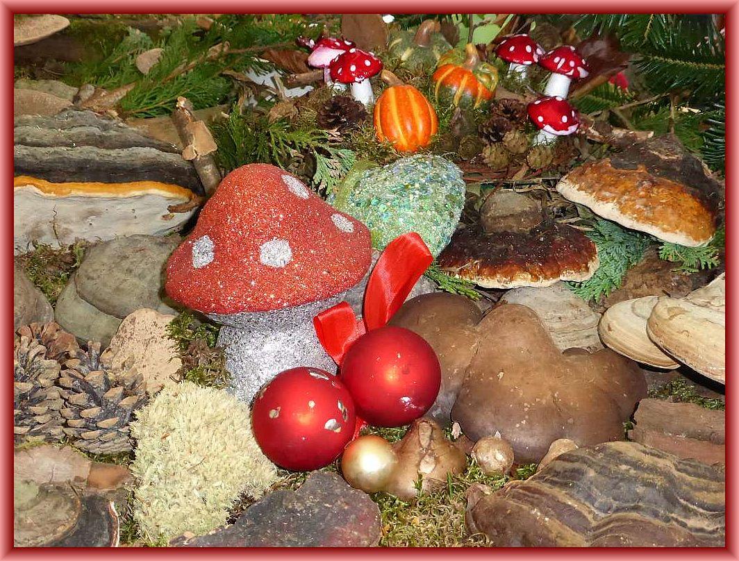 Allen Pilzfreunden ein schönes Weihnachtsfest und ein gesundes, pilzreiches 2017.