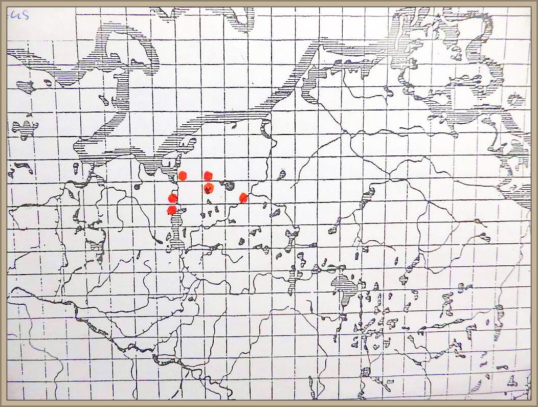 Creolophus cirrhatus (Pers. ex Fr.) Karst. - Dorniger Stachelbart