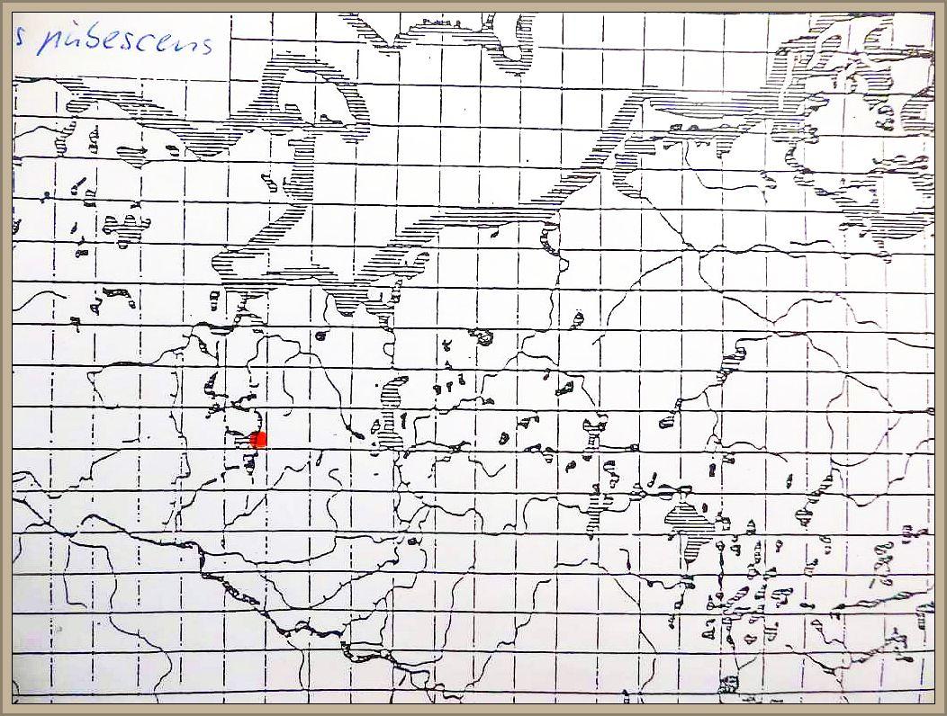 Crepidotus pubescens Bres. - Weichhaariges Stummelfüßchen