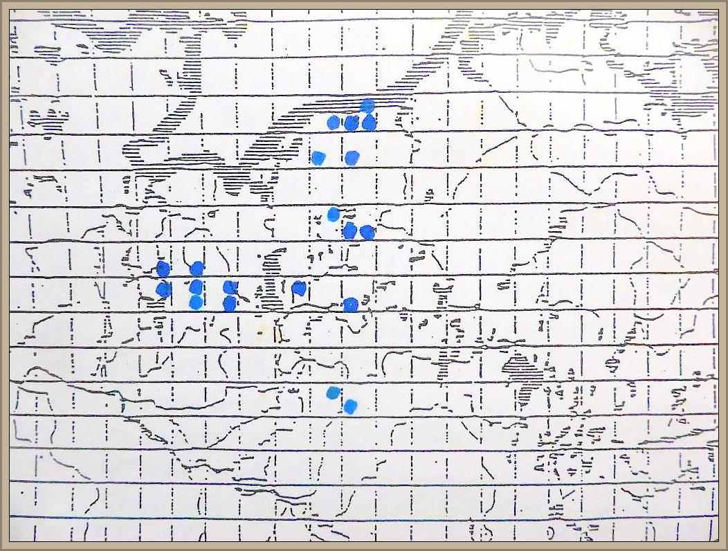 Cudoniella aciculare (Bull. ex Fr.) Schroet. - Dünnstieliger Helmkreisling