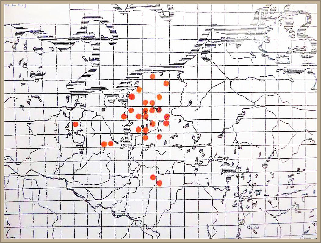 Cyathus striatus (Huds.) Willd.: Pers. - Gestreifter Teuerling