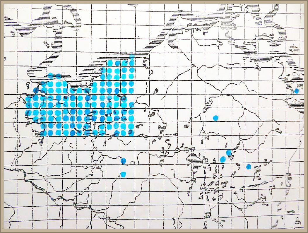 Datronia mollis (Sommerf.: Fr.) Donk. - Großporige Datronie