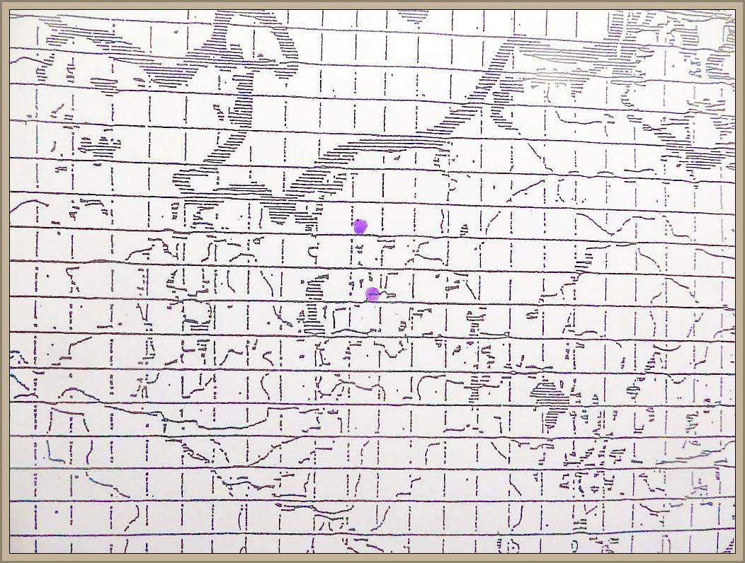Diaporthe leiphaemia (Fr.) Sacc. - Eingesenkter Eichenkugelpilz