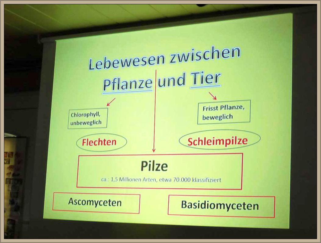 Grobe und vereinfachte Einteilung des Pilzreiches auf einer Folie von Ulrich Klein.