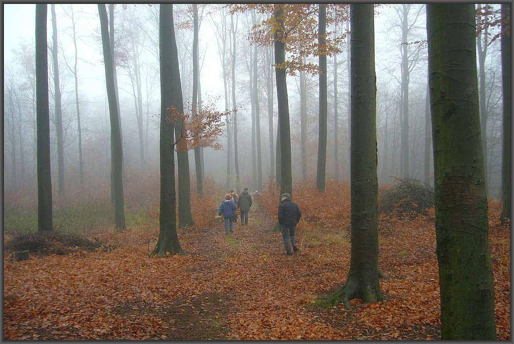 Gespenstische Nebelstimmung auf einer spätherbstlichen Pilzwanderung im Gadebuscher Stadtwald.